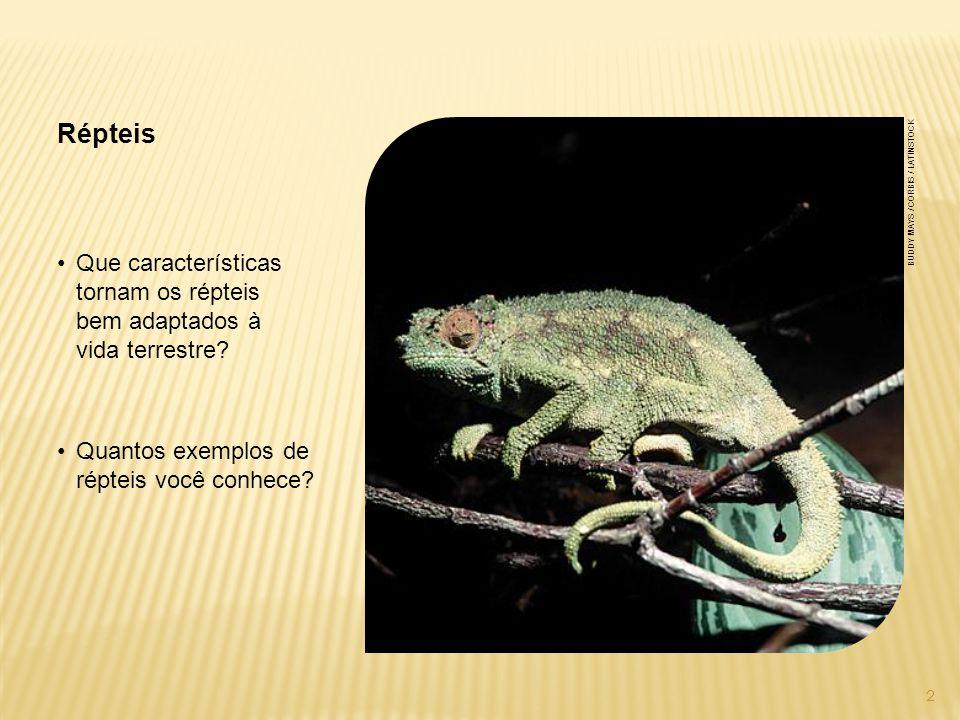Répteis buddy mays / corbis / latinstock. Que características tornam os répteis bem adaptados à vida terrestre