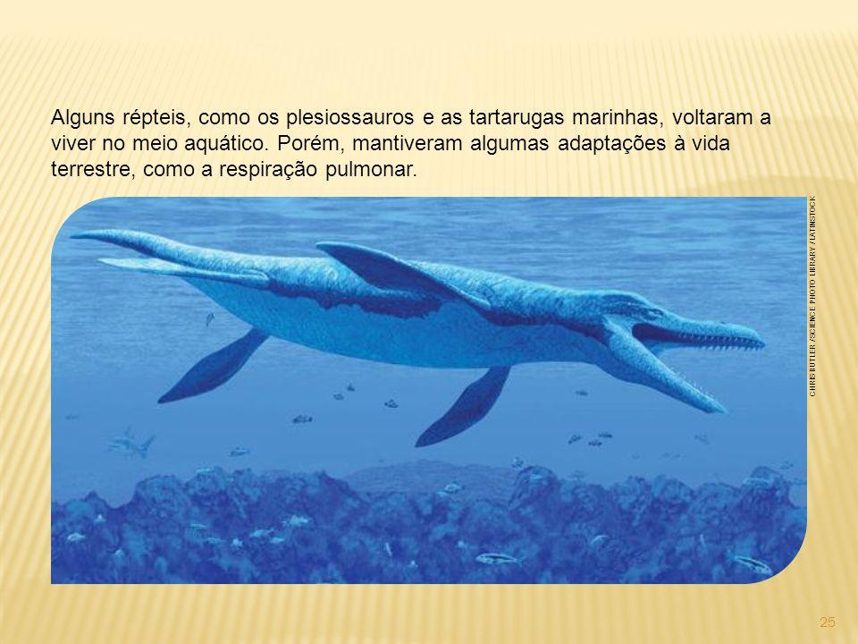 Alguns répteis, como os plesiossauros e as tartarugas marinhas, voltaram a viver no meio aquático. Porém, mantiveram algumas adaptações à vida terrestre, como a respiração pulmonar.