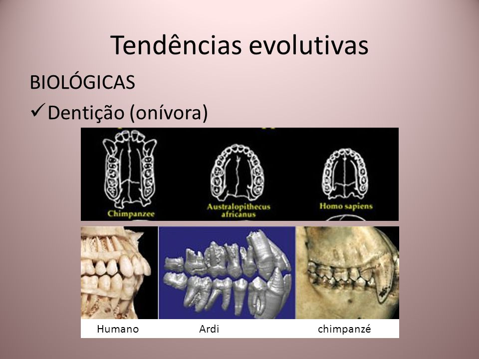 Tendências evolutivas