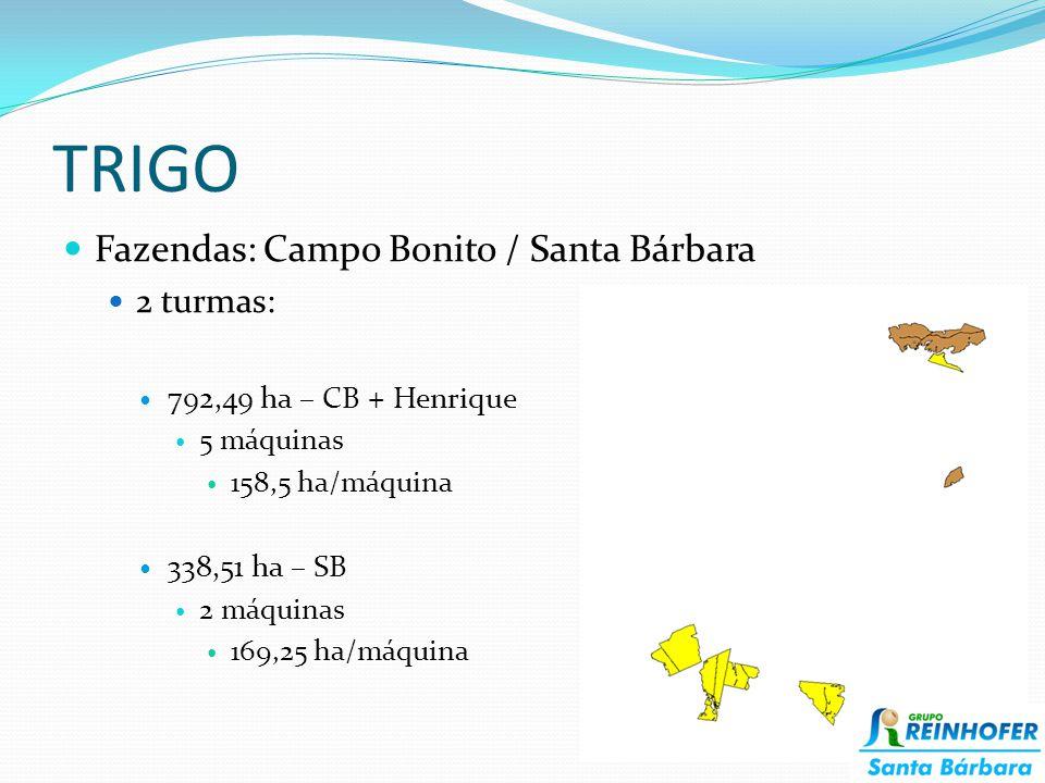 TRIGO Fazendas: Campo Bonito / Santa Bárbara 2 turmas: