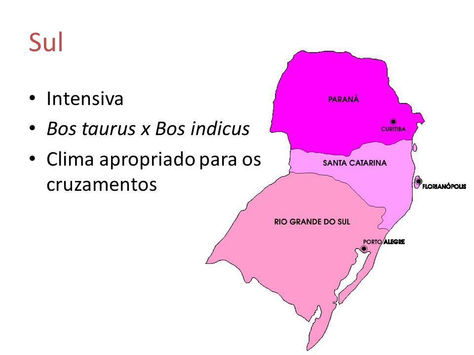 Sul Intensiva Bos taurus x Bos indicus
