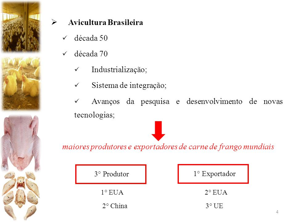 Avicultura Brasileira década 50 década 70 Industrialização;