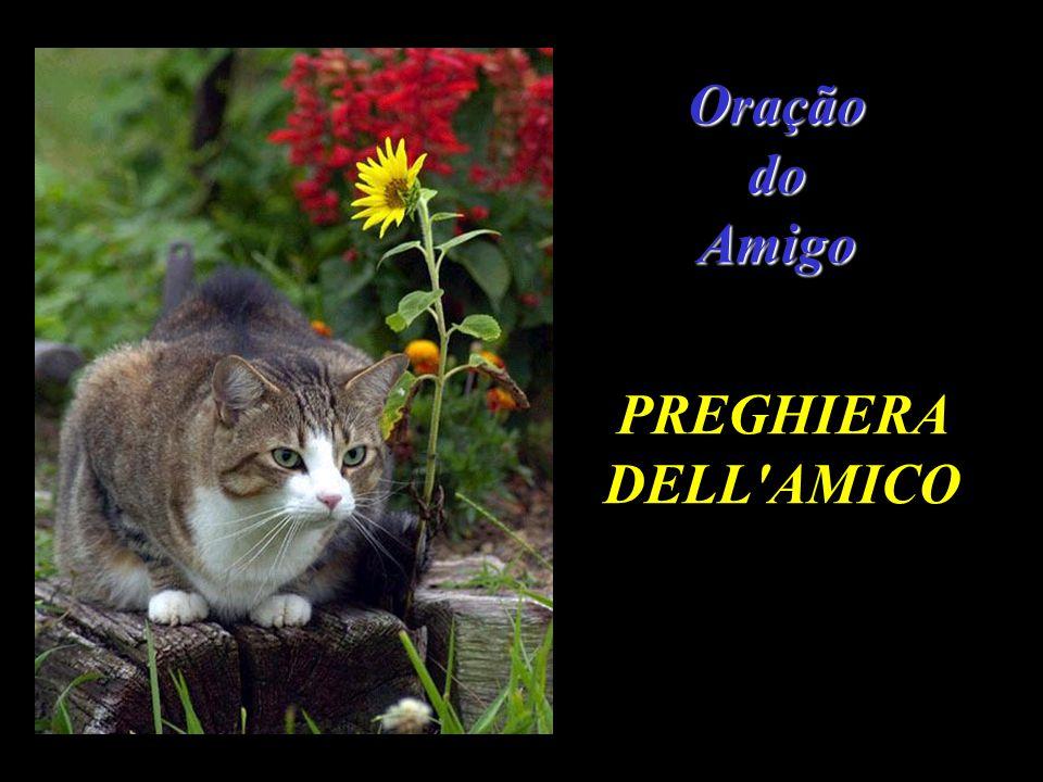 Oração do Amigo PREGHIERA DELL AMICO