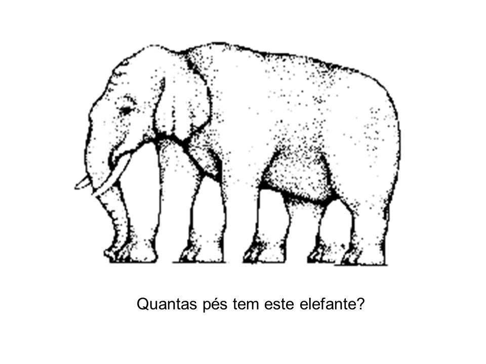 Quantas pés tem este elefante
