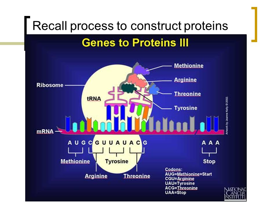 Recall process to construct proteins