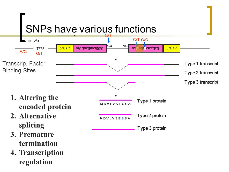 SNPs have various functions