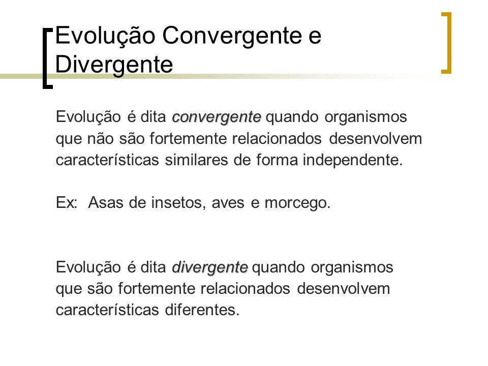 Evolução Convergente e Divergente