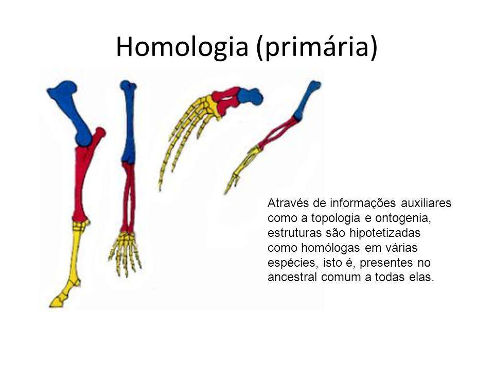 Homologia (primária)