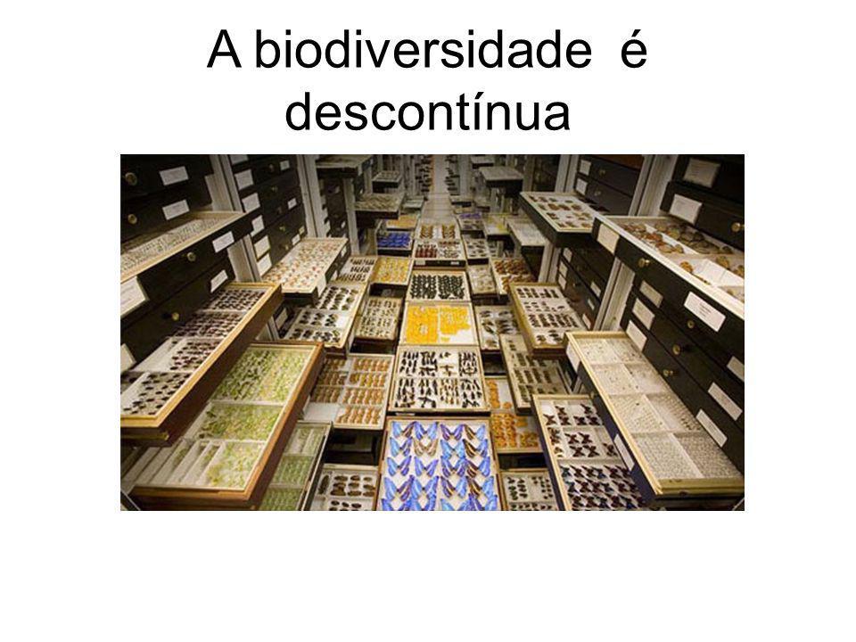 A biodiversidade é descontínua