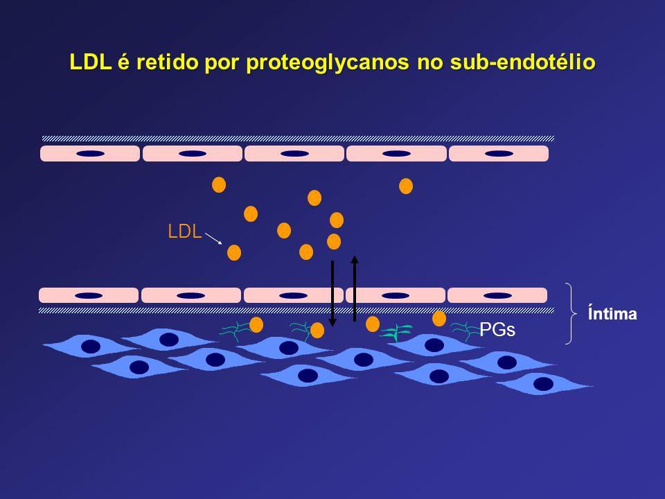 LDL é retido por proteoglycanos no sub-endotélio