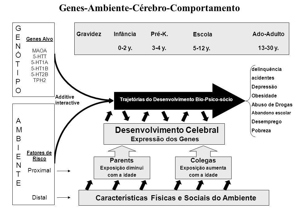 Genes-Ambiente-Cérebro-Comportamento