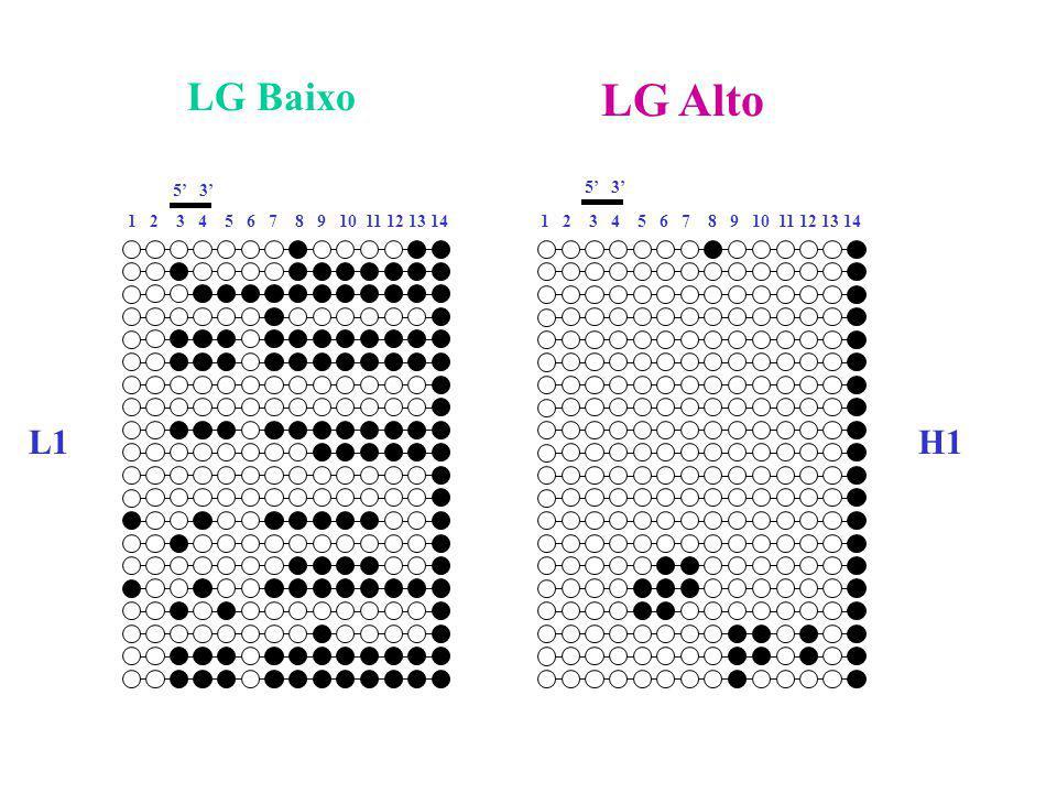 LG Baixo LG Alto. 5' 3' 5' 3' 1 2 3 4 5 6 7 8 9 10 11 12 13 14. 1 2 3 4 5 6 7 8 9 10 11 12 13 14.