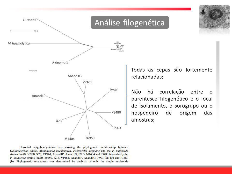Análise filogenética Todas as cepas são fortemente relacionadas;