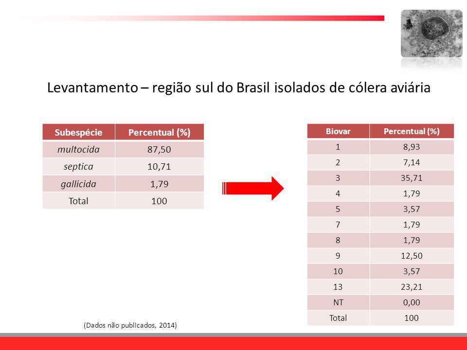Levantamento – região sul do Brasil isolados de cólera aviária
