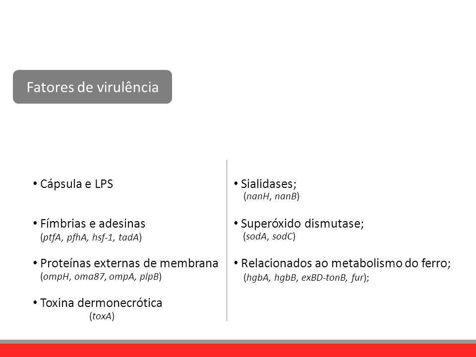 Fatores de virulência Cápsula e LPS Fímbrias e adesinas