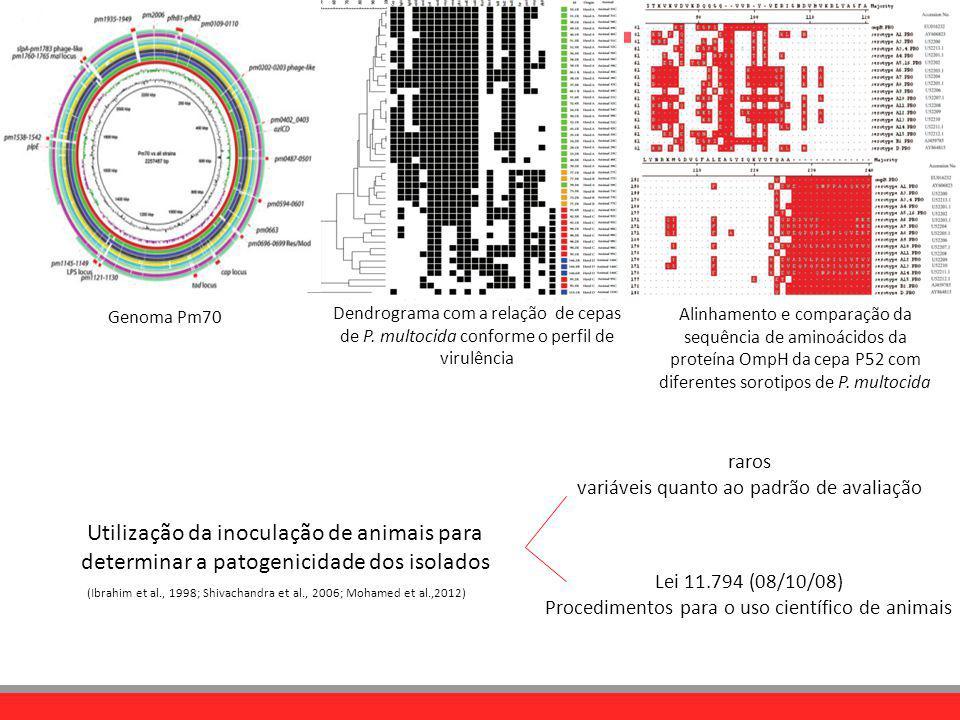Genoma Pm70 Dendrograma com a relação de cepas de P. multocida conforme o perfil de virulência.