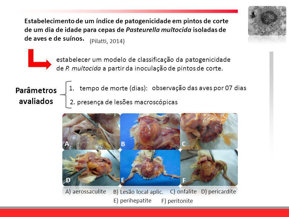 Estabelecimento de um índice de patogenicidade em pintos de corte de um dia de idade para cepas de Pasteurella multocida isoladas de de aves e de suínos.