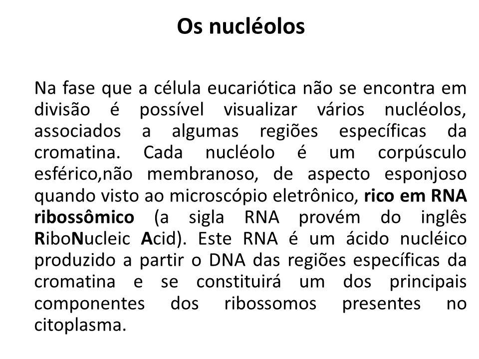 Os nucléolos