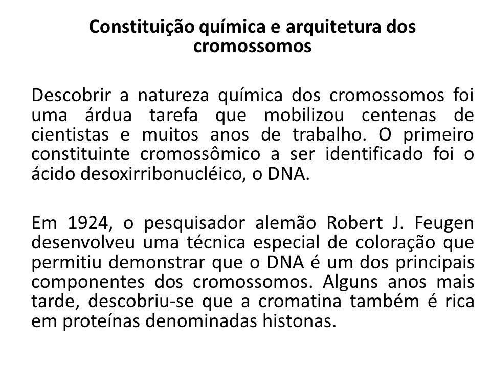 Constituição química e arquitetura dos cromossomos Descobrir a natureza química dos cromossomos foi uma árdua tarefa que mobilizou centenas de cientistas e muitos anos de trabalho.