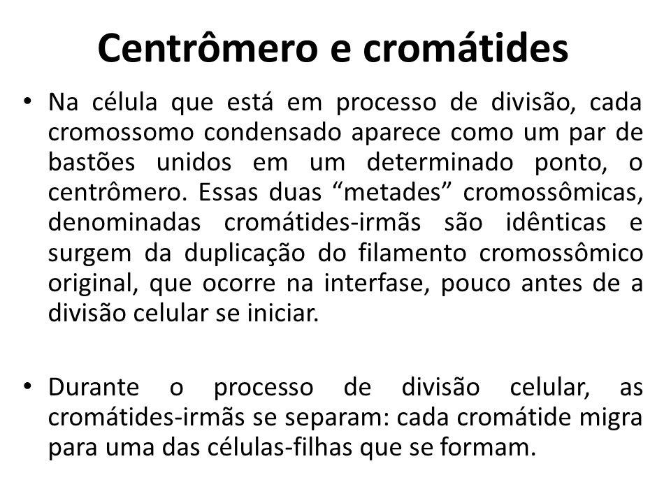 Centrômero e cromátides
