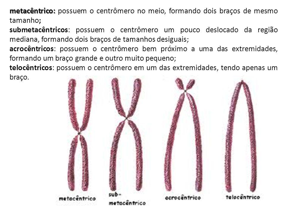 metacêntrico: possuem o centrômero no meio, formando dois braços de mesmo tamanho;