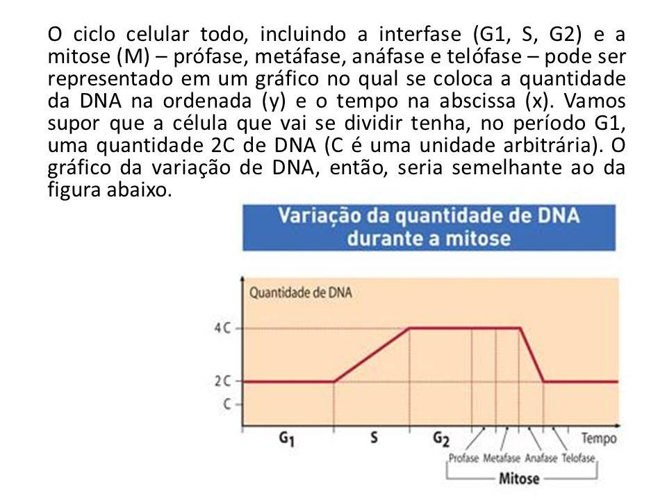 O ciclo celular todo, incluindo a interfase (G1, S, G2) e a mitose (M) – prófase, metáfase, anáfase e telófase – pode ser representado em um gráfico no qual se coloca a quantidade da DNA na ordenada (y) e o tempo na abscissa (x).