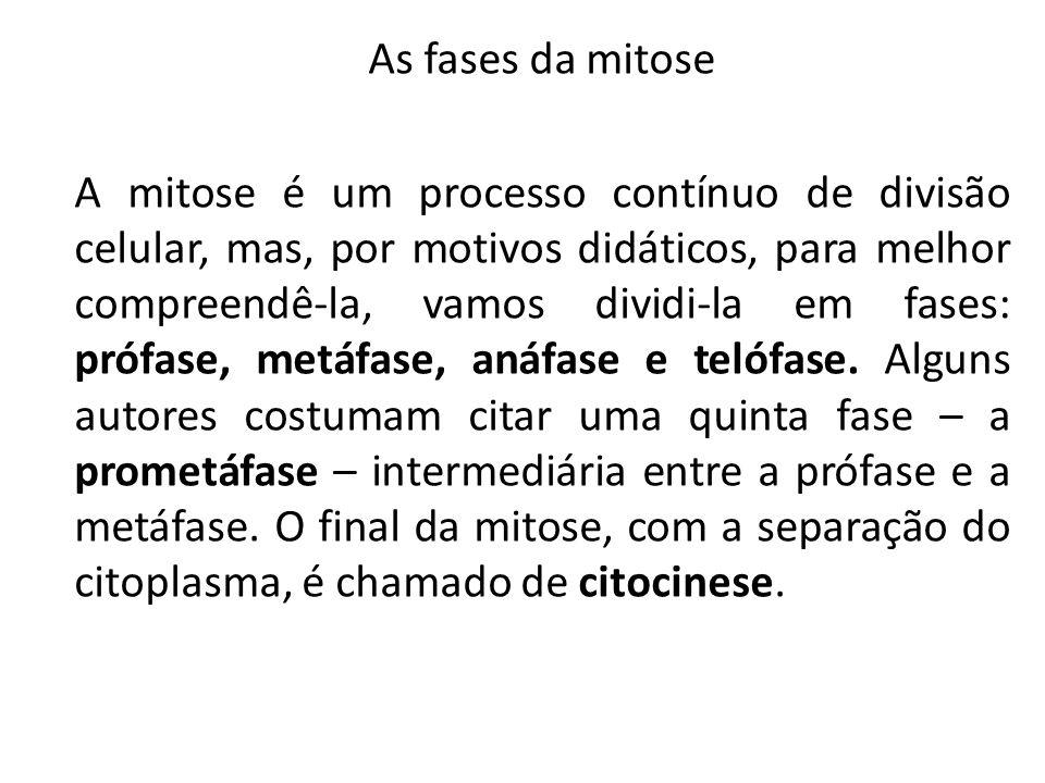 As fases da mitose A mitose é um processo contínuo de divisão celular, mas, por motivos didáticos, para melhor compreendê-la, vamos dividi-la em fases: prófase, metáfase, anáfase e telófase.