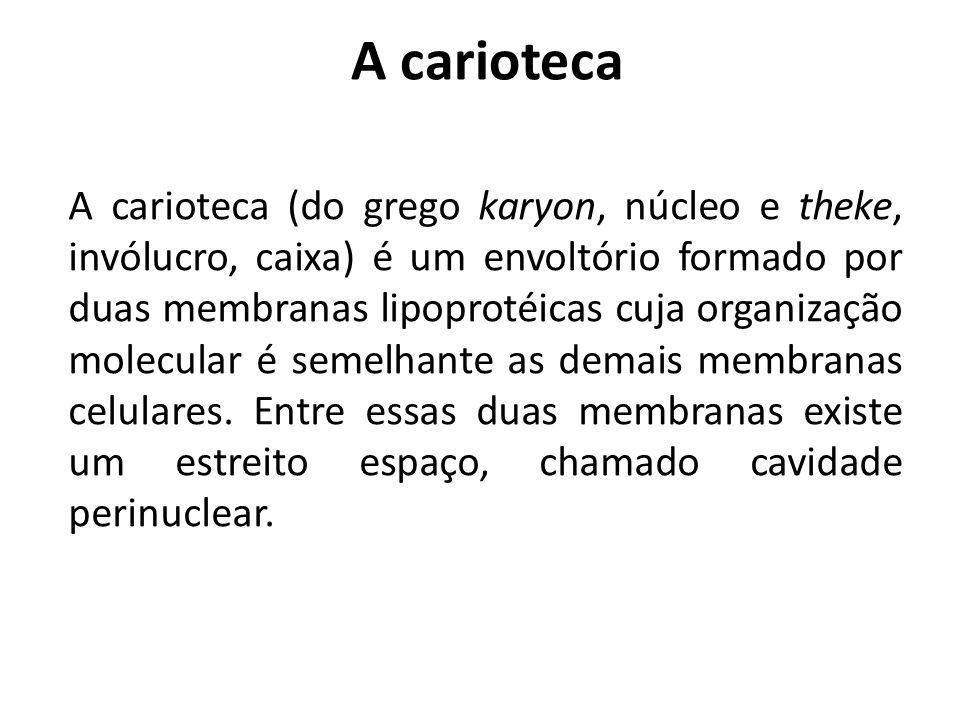 A carioteca