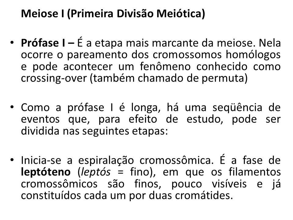 Meiose I (Primeira Divisão Meiótica)