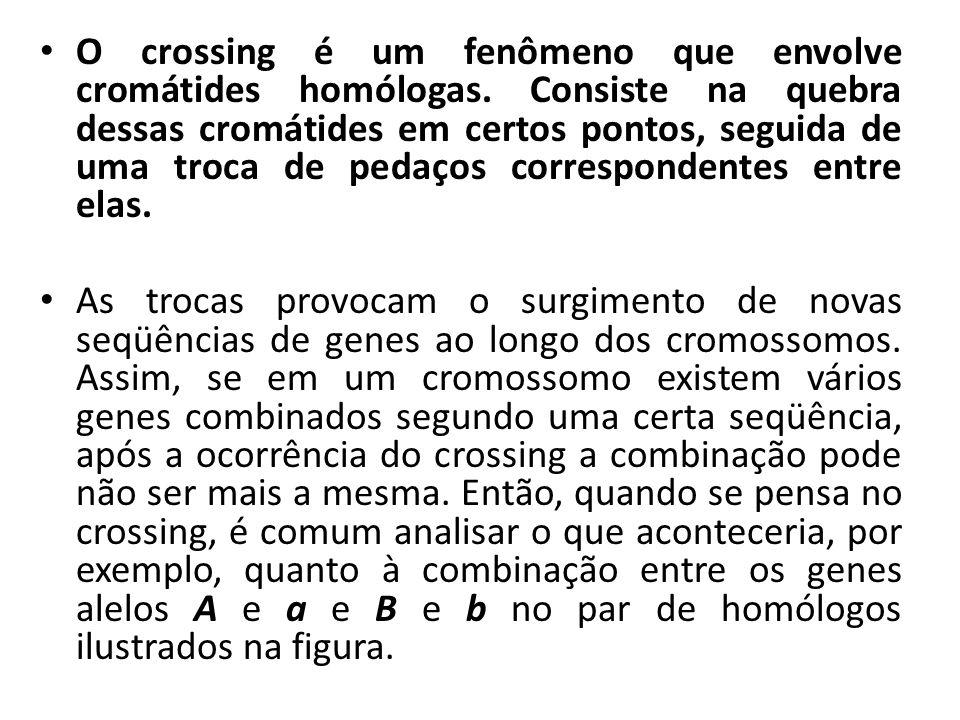 O crossing é um fenômeno que envolve cromátides homólogas
