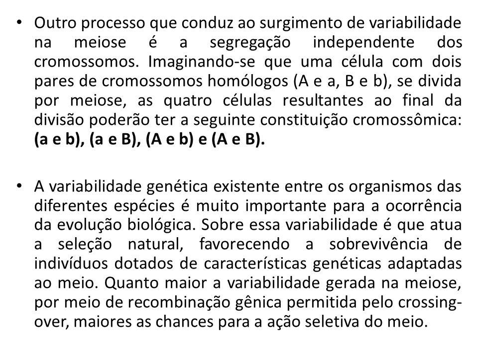 Outro processo que conduz ao surgimento de variabilidade na meiose é a segregação independente dos cromossomos. Imaginando-se que uma célula com dois pares de cromossomos homólogos (A e a, B e b), se divida por meiose, as quatro células resultantes ao final da divisão poderão ter a seguinte constituição cromossômica: (a e b), (a e B), (A e b) e (A e B).