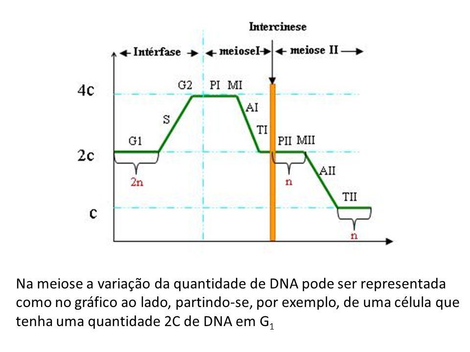 Na meiose a variação da quantidade de DNA pode ser representada como no gráfico ao lado, partindo-se, por exemplo, de uma célula que tenha uma quantidade 2C de DNA em G1