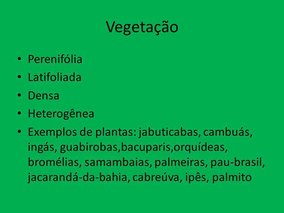 Vegetação Perenifólia Latifoliada Densa Heterogênea
