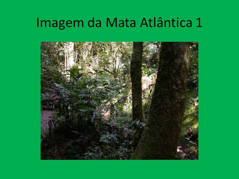 Imagem da Mata Atlântica 1
