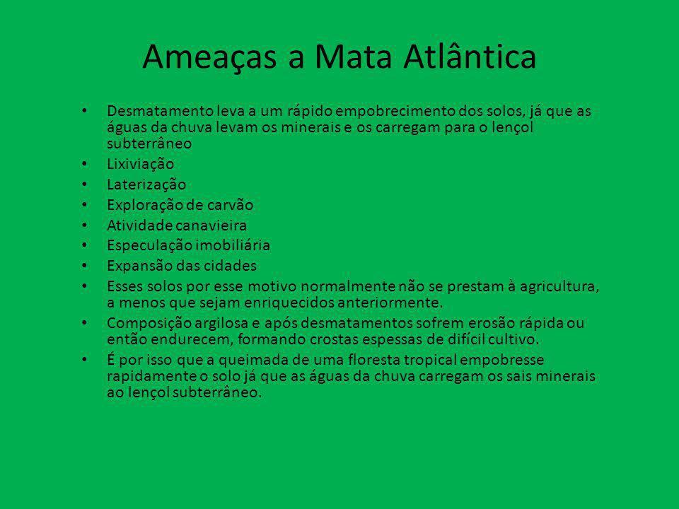 Ameaças a Mata Atlântica