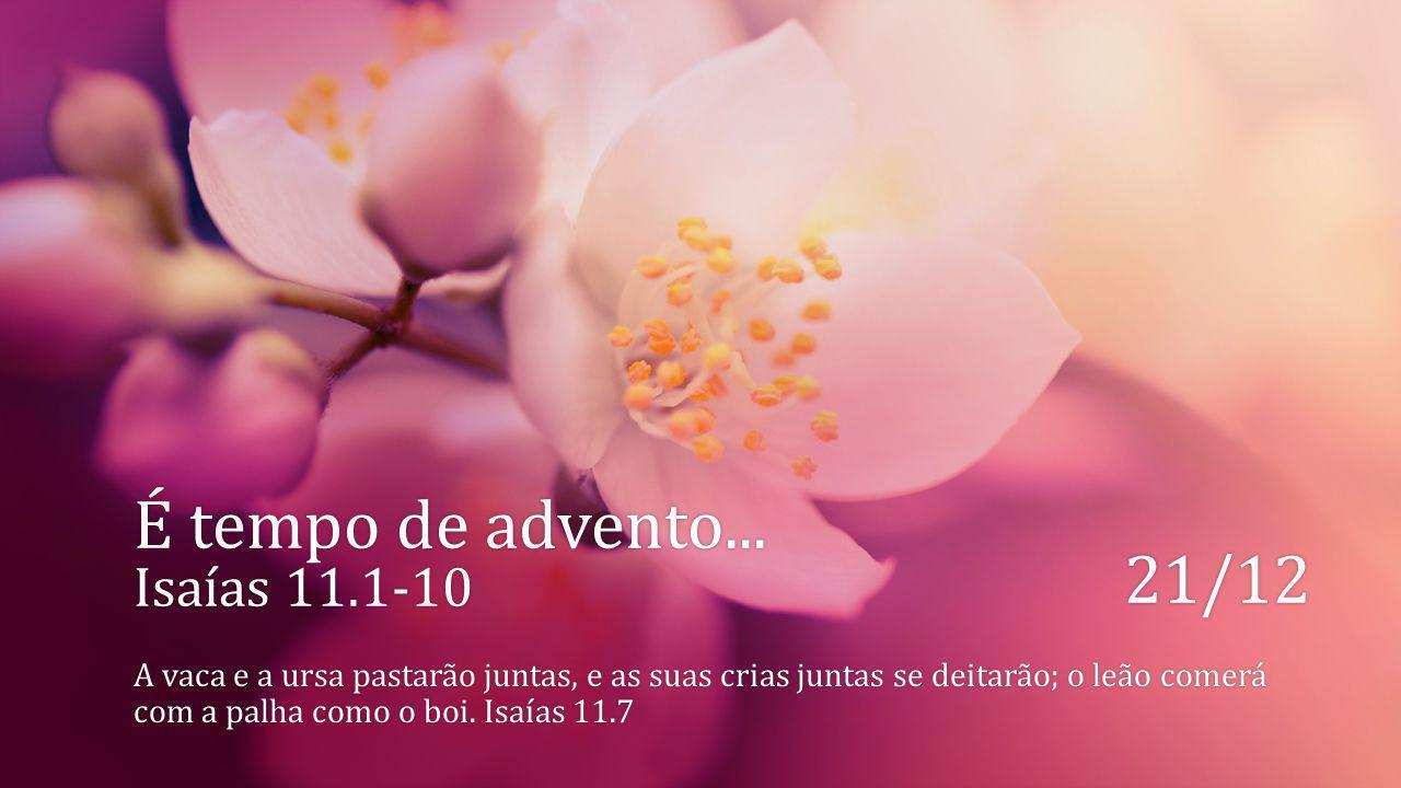 É tempo de advento... Isaías 11.1-10