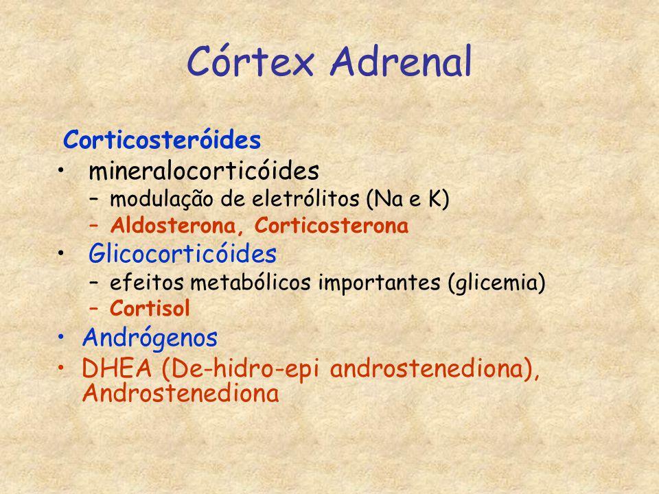 Córtex Adrenal Corticosteróides mineralocorticóides Glicocorticóides