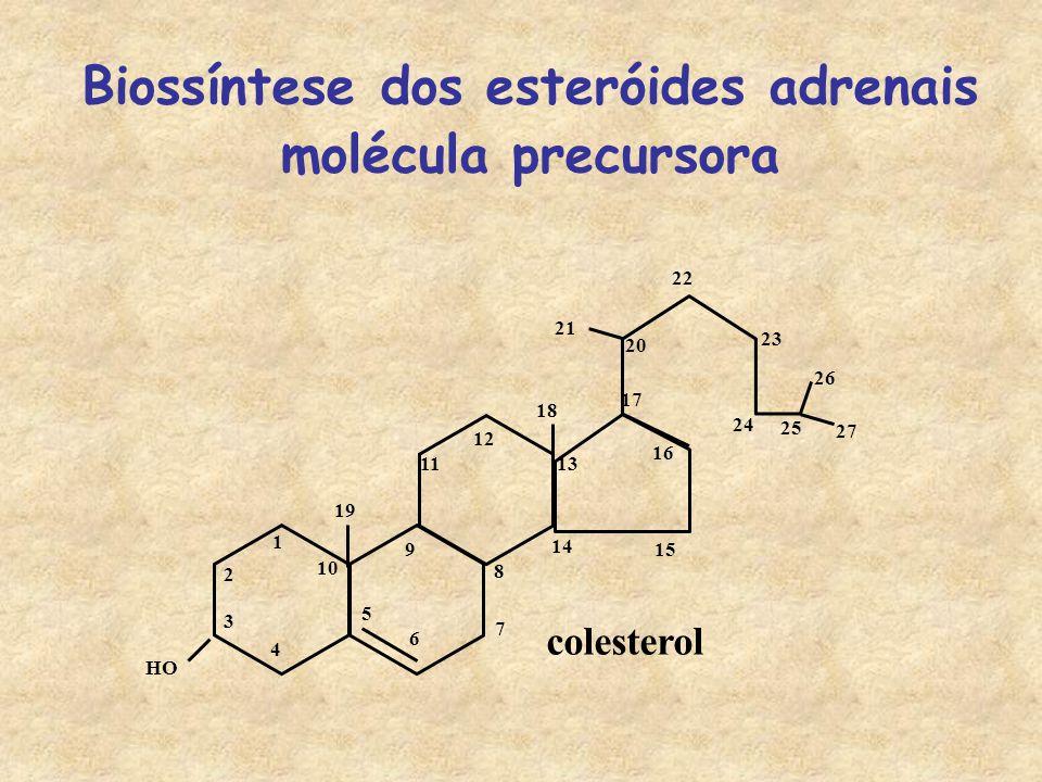 Biossíntese dos esteróides adrenais molécula precursora