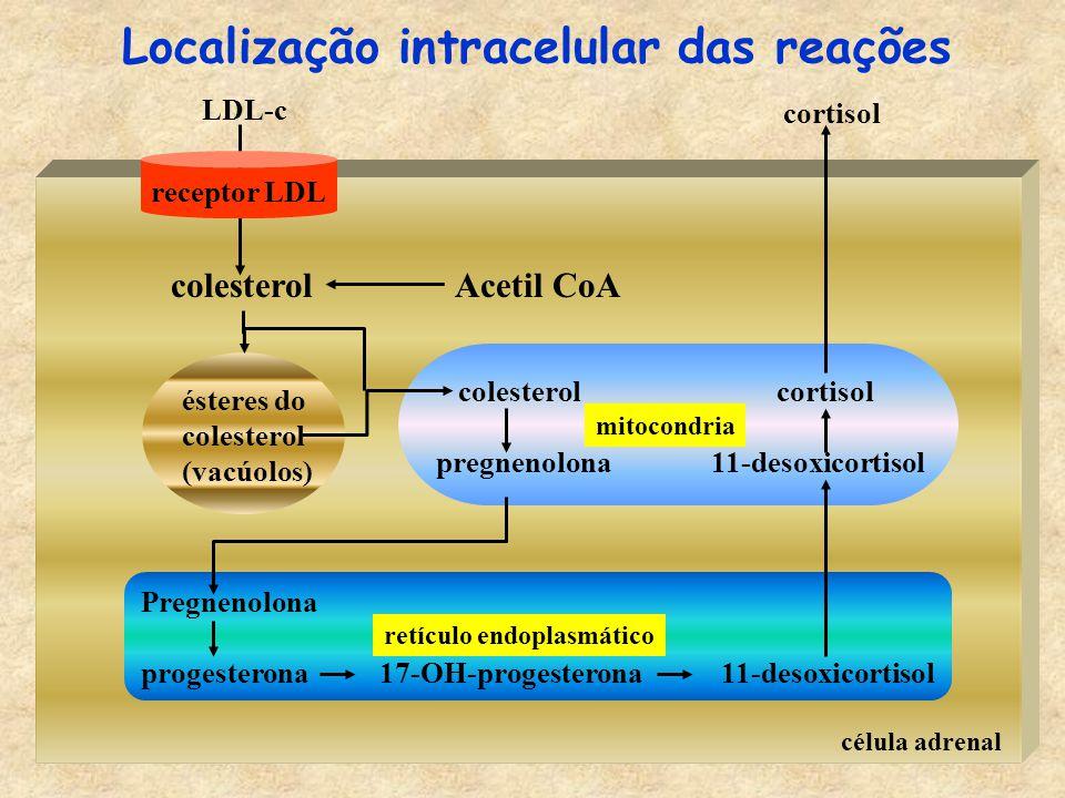 Localização intracelular das reações