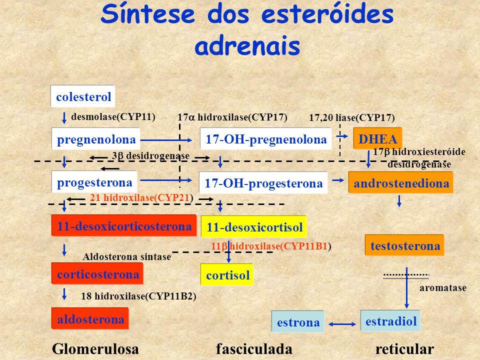 Síntese dos esteróides adrenais