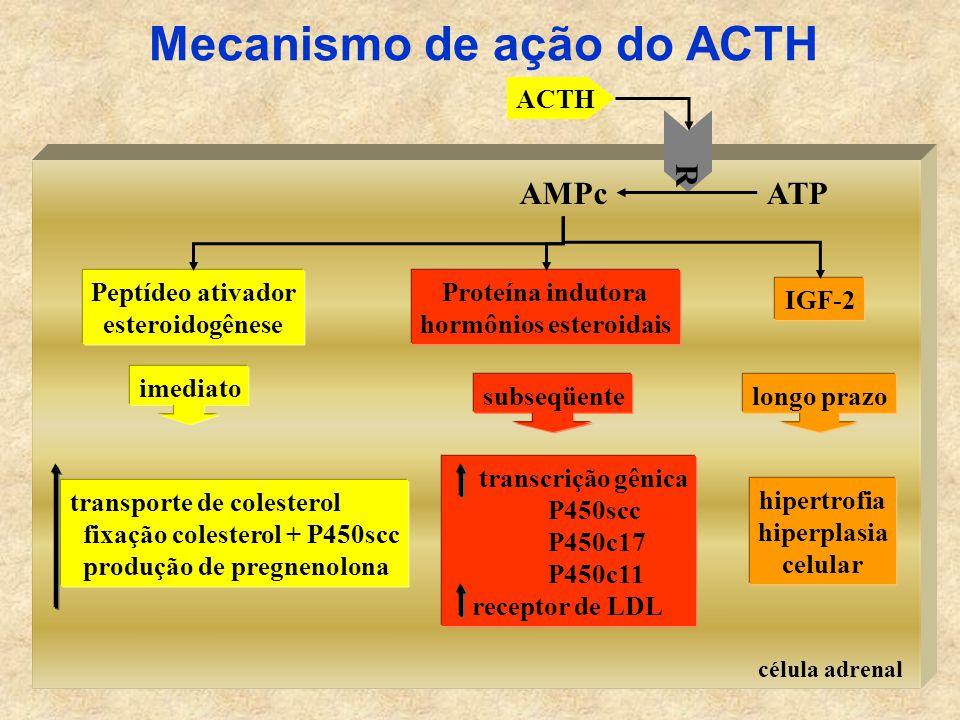 Mecanismo de ação do ACTH hormônios esteroidais