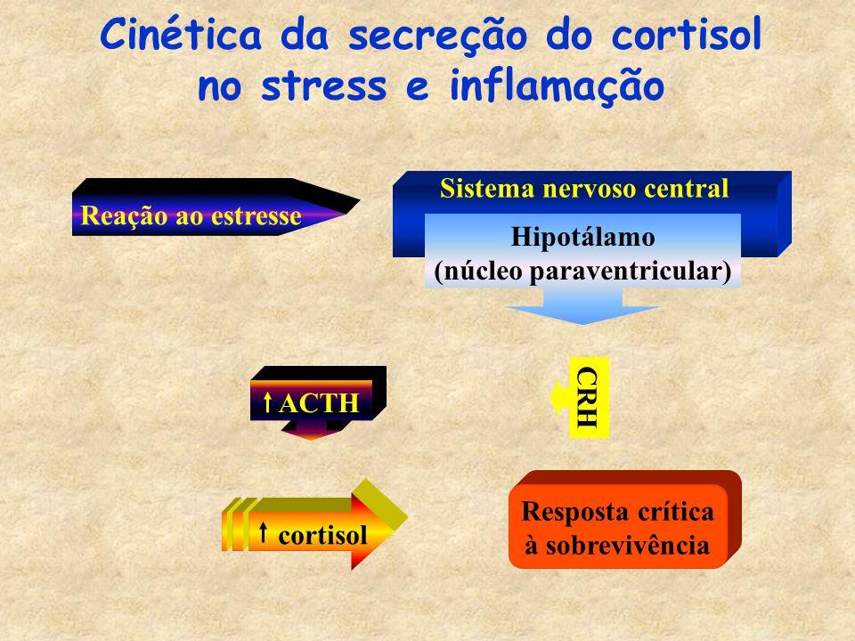 Cinética da secreção do cortisol no stress e inflamação
