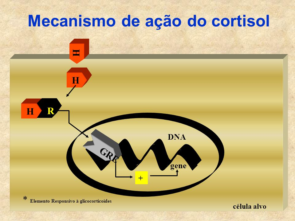 Mecanismo de ação do cortisol
