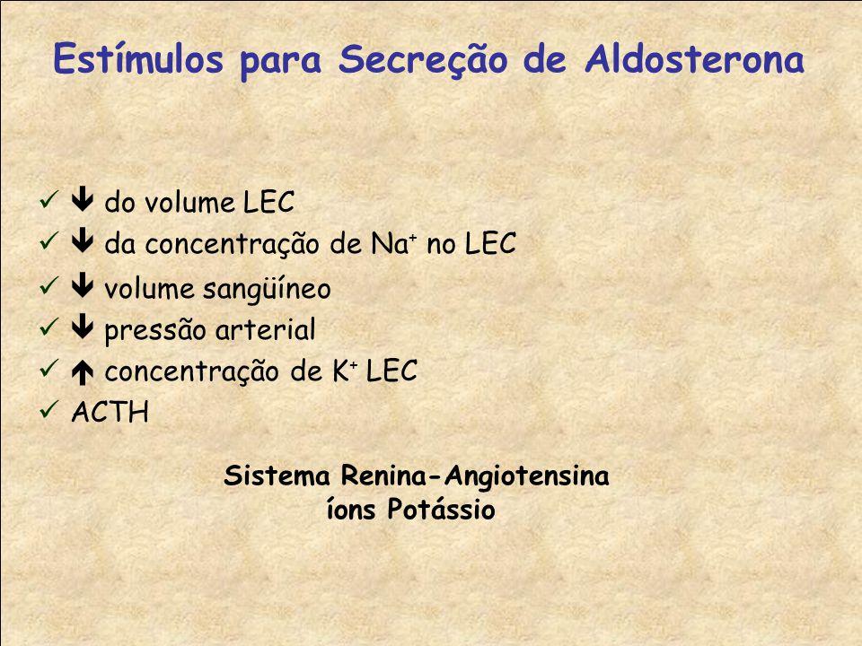 Estímulos para Secreção de Aldosterona Sistema Renina-Angiotensina