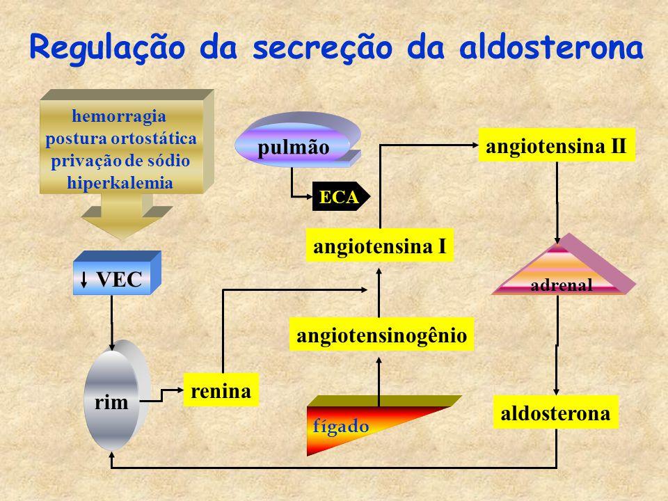 Regulação da secreção da aldosterona