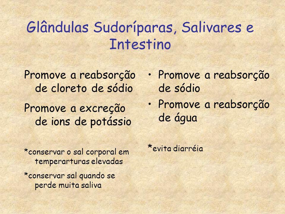 Glândulas Sudoríparas, Salivares e Intestino