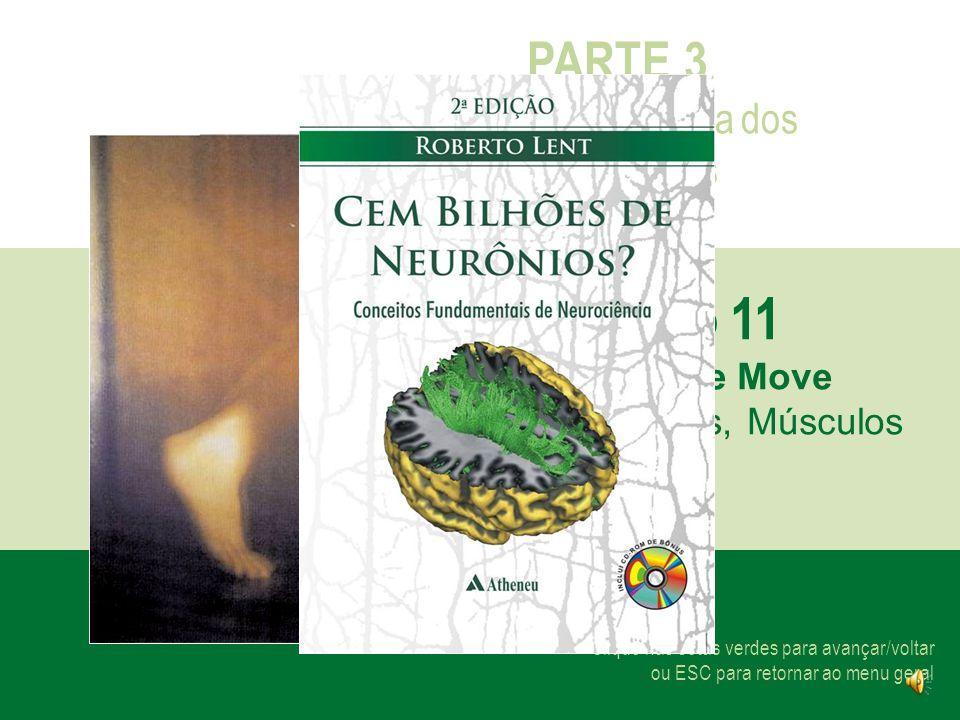Capítulo 11 PARTE 3 Neurociência dos Movimentos O Corpo se Move