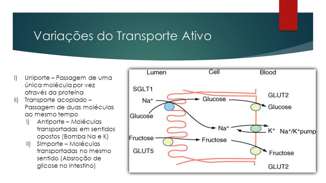 Variações do Transporte Ativo