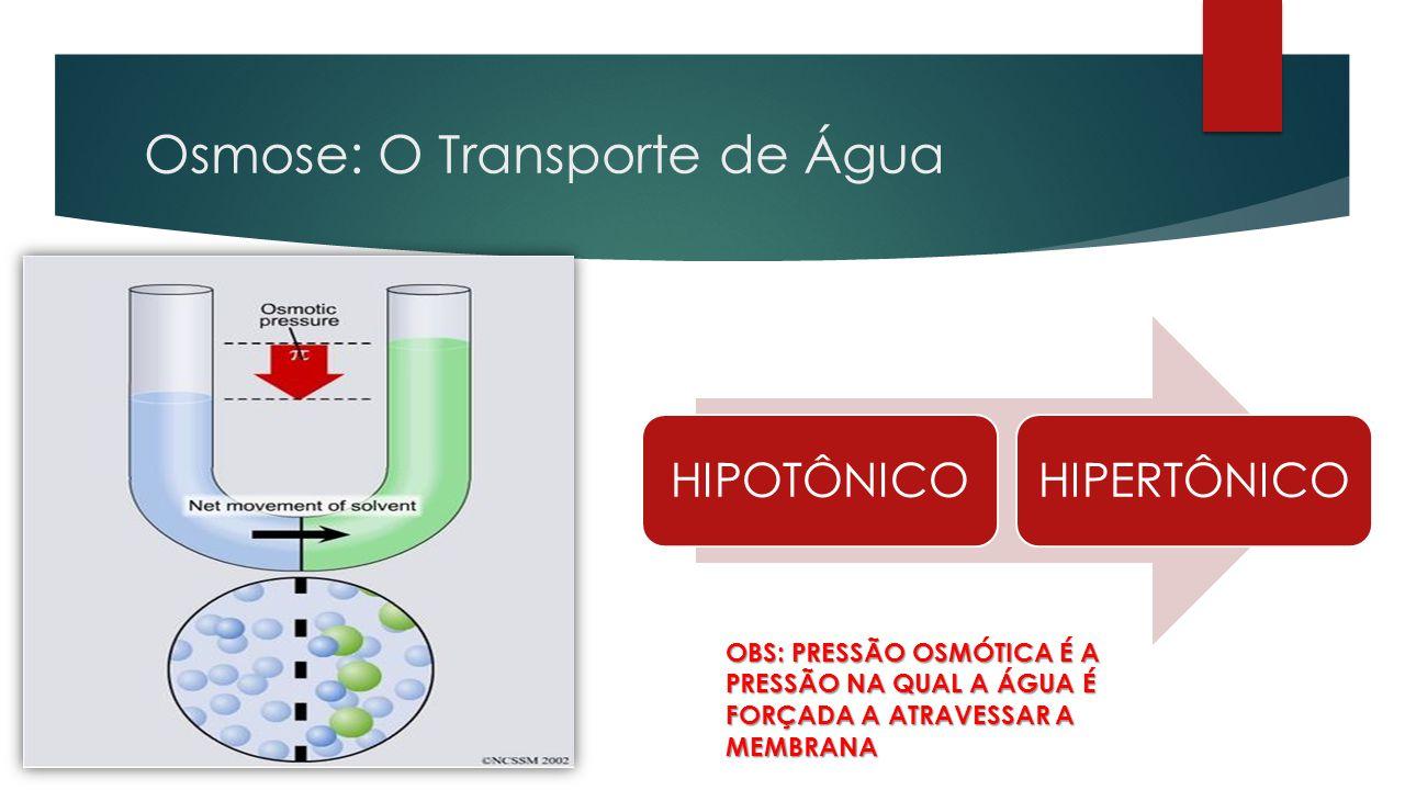 Osmose: O Transporte de Água