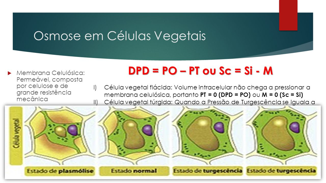 Osmose em Células Vegetais